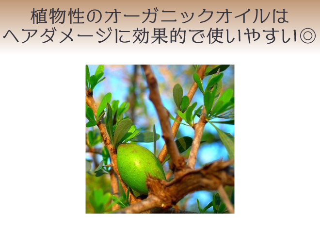 ヘアケアには植物性のオーガニックオイルがおすすめ