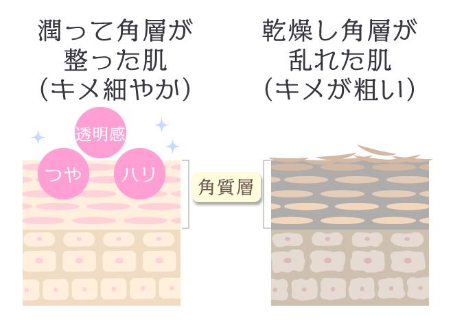 乾燥によるターンオーバーの変化