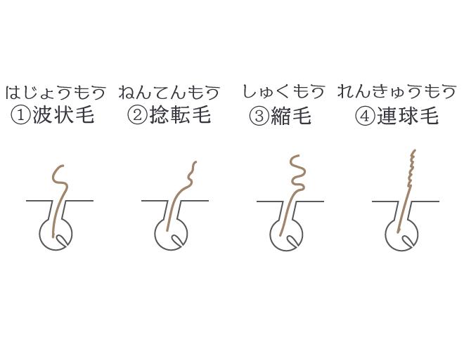 くせ毛の種類は4種類。波状毛、捻転毛、縮毛、連球毛