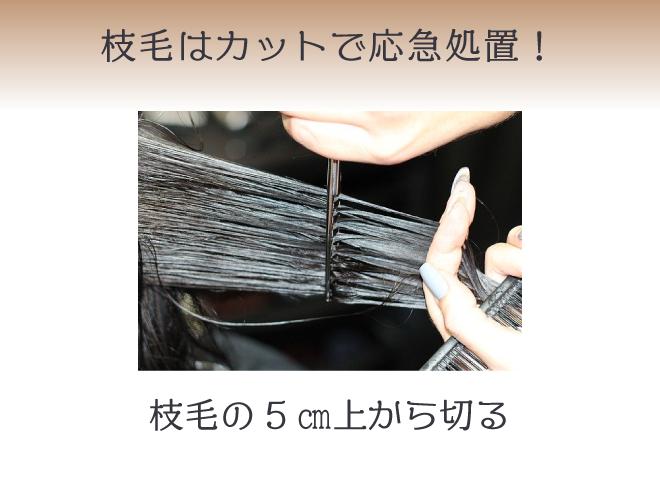 (上段) 枝毛はカットで応急処置! (下段)枝毛の5㎝上から切る