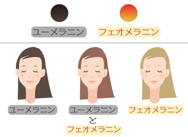 色素の種類と髪色