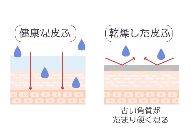 肌がゴワつく・保湿しても水分が入らない仕組み