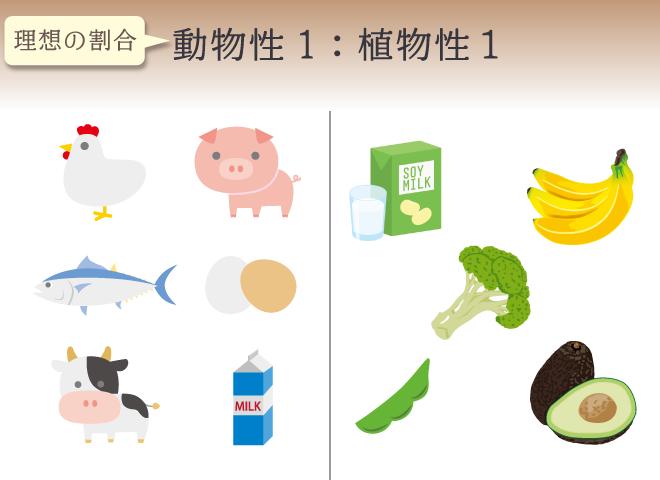 動物性と植物性は1対1で摂るのが理想